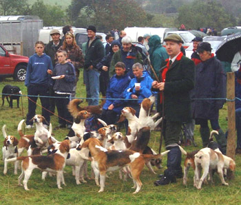 Black comb beagles with huntsman Stan Ellwood