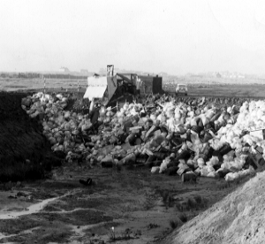 Dumping nulcear waste at Drigg in the 1960s